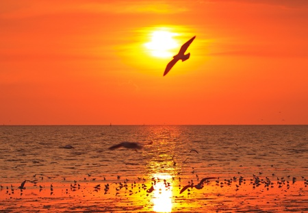 Silhouetted Group Of seagull birds flying over sunset  photo