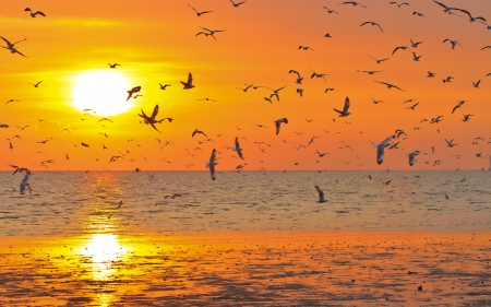 Silhouetted Group Of seagull birds flying over sunset Stock Photo - 17964056
