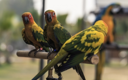 Parrots in the wild  Stock Photo - 18265230
