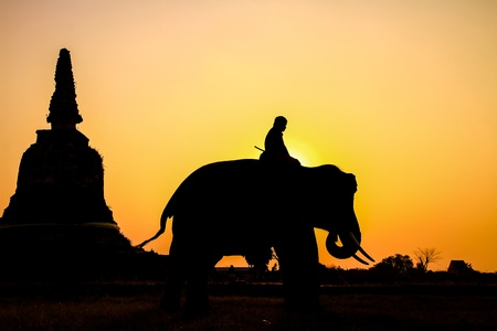 silhouette action of elephant in Ayutthaya Province, thailand Stock Photo - 18382253