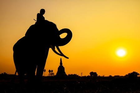thai elephant: silhouette action of elephant in Ayutthaya Province, thailand