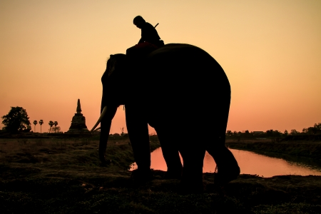 silhouette action of elephant in Ayutthaya Province, thailand