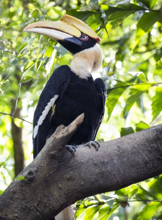 strikingly: great hornbill bird
