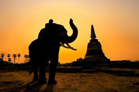 Silhouette of Local beauty and elephant in twilight time  photo