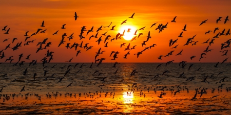 Seagulls flying against a sunset  Stock Photo