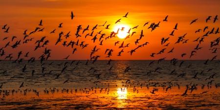 Seagulls flying against a sunset  版權商用圖片