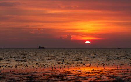 freshwater bird: Seagulls flying against a sunset  Stock Photo