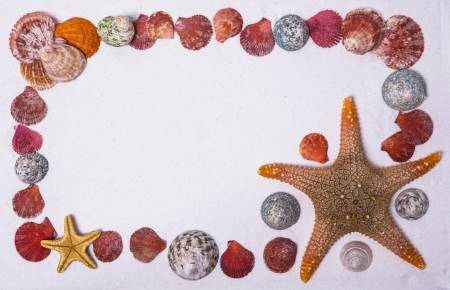 frame made with starfish and shells on the white sand Stock Photo - 21079348
