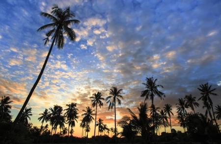 在早晨的風景剪影椰子樹
