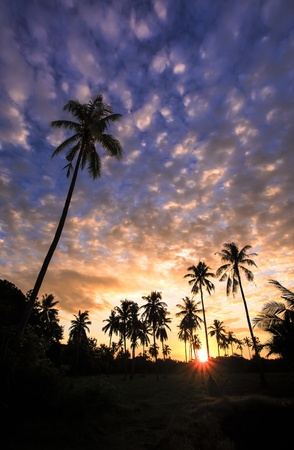 Landscape silhouette coconut tree in the morning  photo