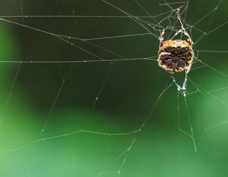 Macro Spider in the wild , thailand  photo