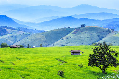 Landscape of the lined Green terraced rice and corn field on the mountain photo