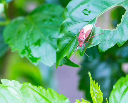closeup of the red winged insect with nature background photo