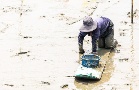 A cockle farmer sitting on the board while collect cockles from the sea in Phetchaburi province ,Thailand  photo