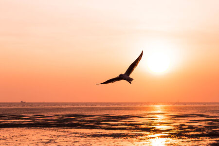 Beautiful sunset over the sea with seagull on foreground silhouettes photo