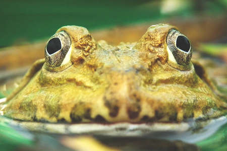 The Eye of the Frog