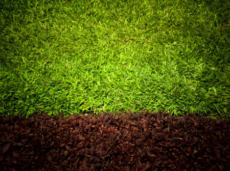 Green grass surface photo
