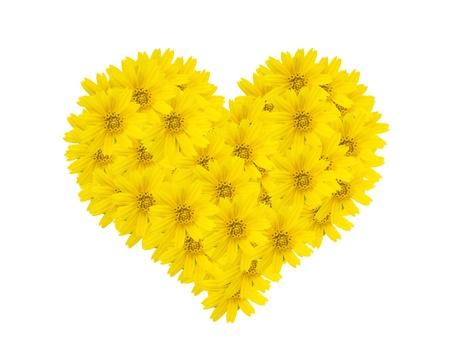 hart bloemen op witte achtergrond, bloemen-serie, macro foto
