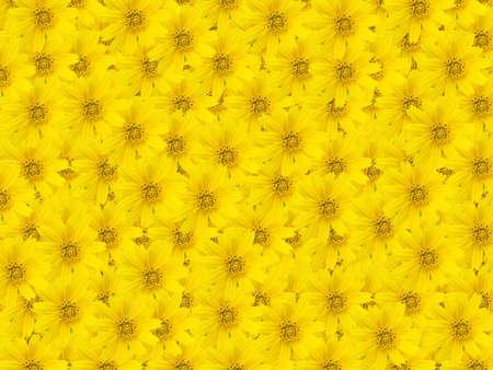 Beautiful yellow flower background