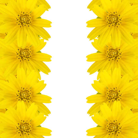 yellow flowers with copy space on White background photo