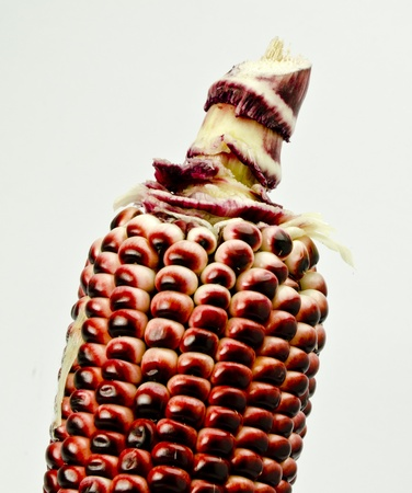 isolated texture of sweet purple corn Stock Photo - 13302009