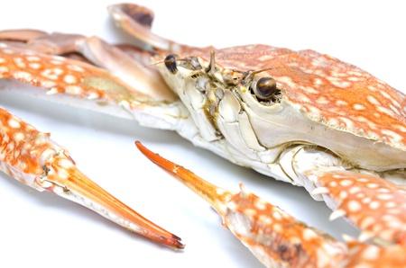 Orange crab isolated on white background