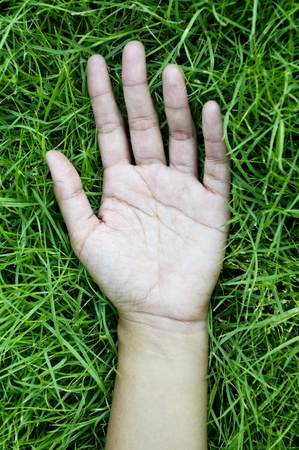 Hand on green lush grass photo