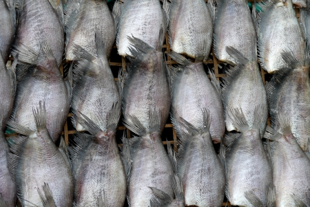 fishery products: Fish drying on a wooden stretcher mole Thai food Stock Photo