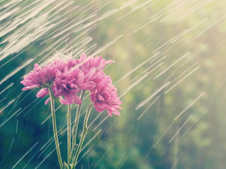 rain flowers  old retro vintage style photo