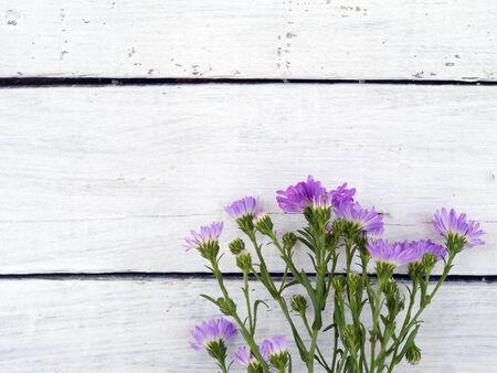 fleur sur bois Banque d'images