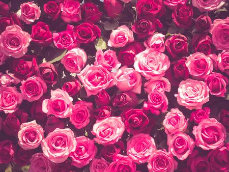 flores rosa con efecto de filtro de estilo retro de la vendimia