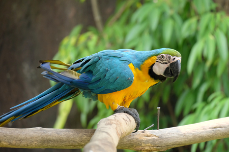 macaw: macaw parrot