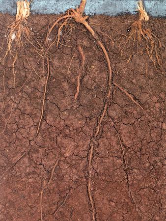 soil conservation: peat soil background