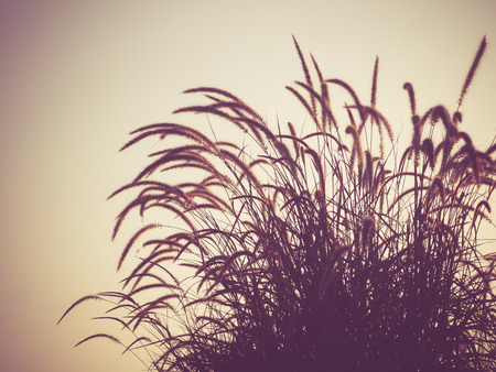 field of grass during sunset with filter effect retro vintage style photo