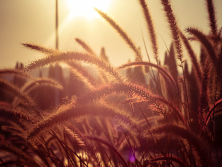 field of grass during sunset photo