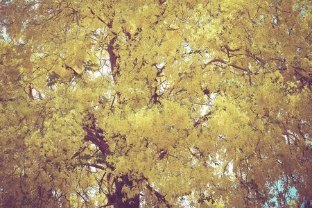 yellow trees: Yellow Trees with filter effect retro vintage style