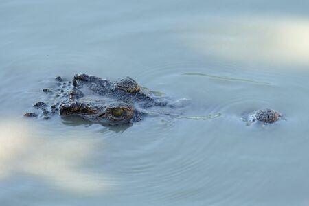 vicious: Crocodile