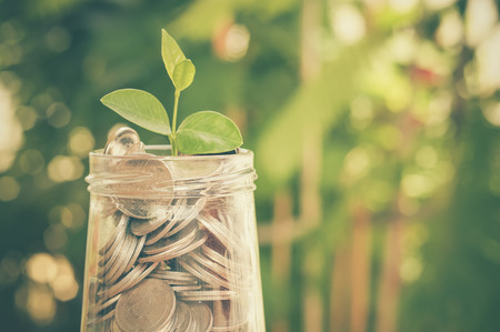 investing: plant growing out of coins with filter effect retro vintage style Stock Photo