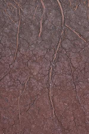 turba: suelo de turba como fondo Foto de archivo