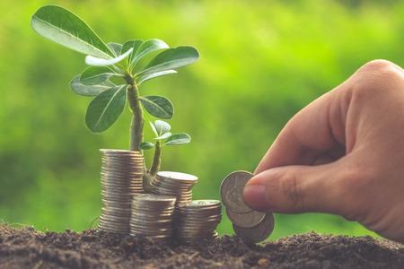 ingresos: Dinero y planta con la mano con efecto de filtro de estilo retro de la vendimia
