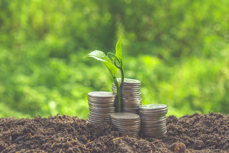 money plant: plant growing out of coins with filter effect retro vintage style Stock Photo