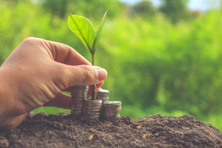 the value: Dinero y planta con la mano con efecto de filtro de estilo retro de la vendimia