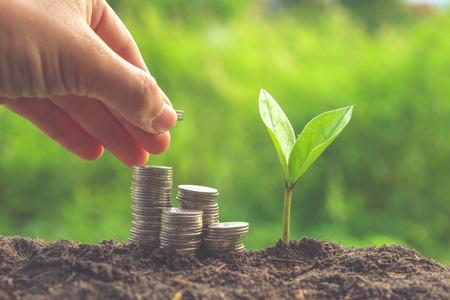 hojas de arbol: Dinero y planta con la mano con efecto de filtro de estilo retro de la vendimia