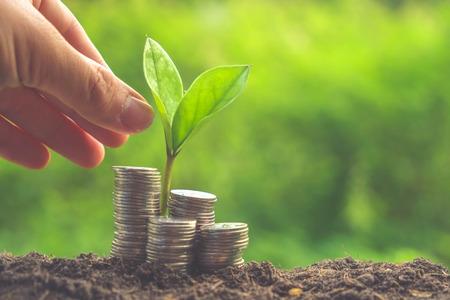 crecimiento planta: Dinero y planta con la mano con efecto de filtro de estilo retro de la vendimia