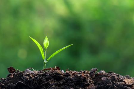 Jonge plant Stockfoto
