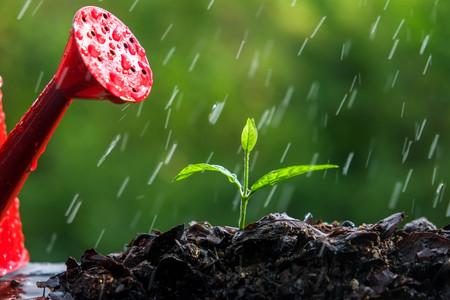 rain: Green sprouts in the rain