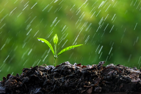 Green sprouts in the rain
