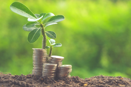 silver coins: plant growing out of coins with filter effect retro vintage style Stock Photo