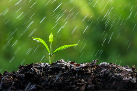 soil: Green sprouts in the rain