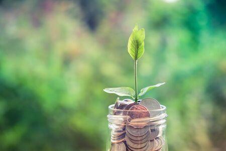 dinero: Brote que crece en la hucha de cristal en concepto de ahorro de dinero con efecto de filtro de estilo retro de la vendimia
